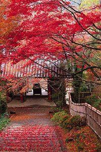 kyoto_pic_01