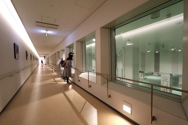 Galleria aperta al pubblico per vedere l'asta dei tonni a Toyosu