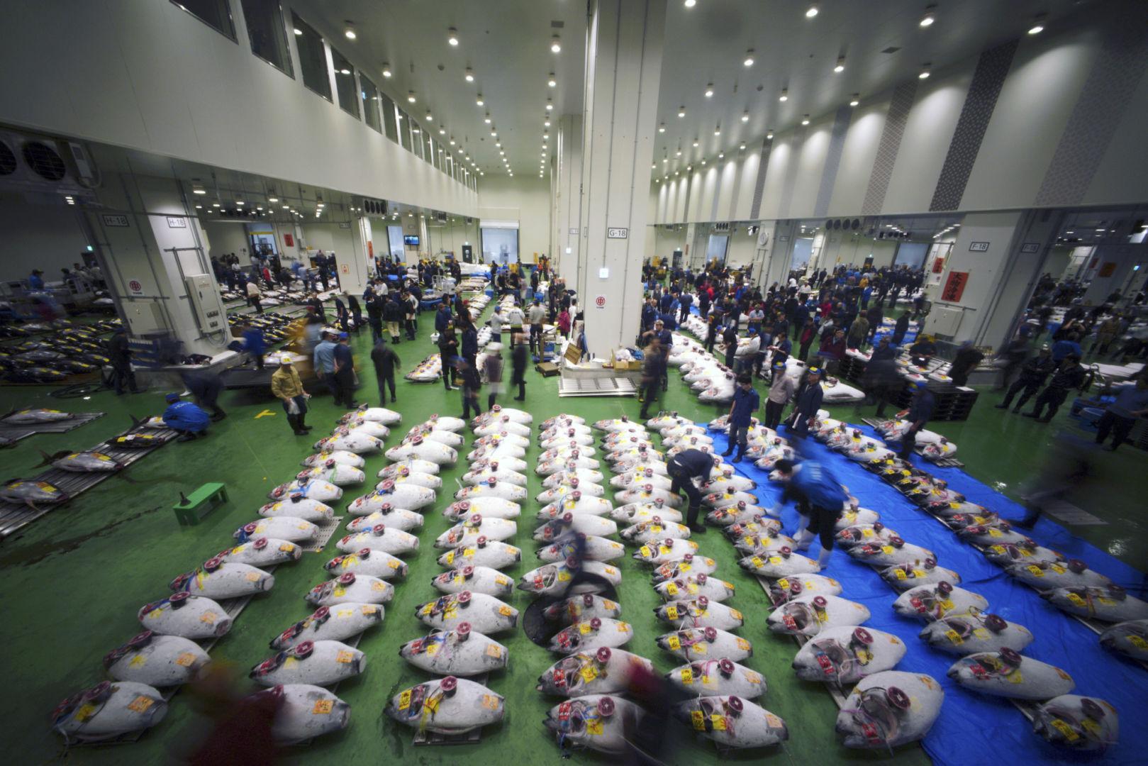 La prima asta dei tonni a Toyosu