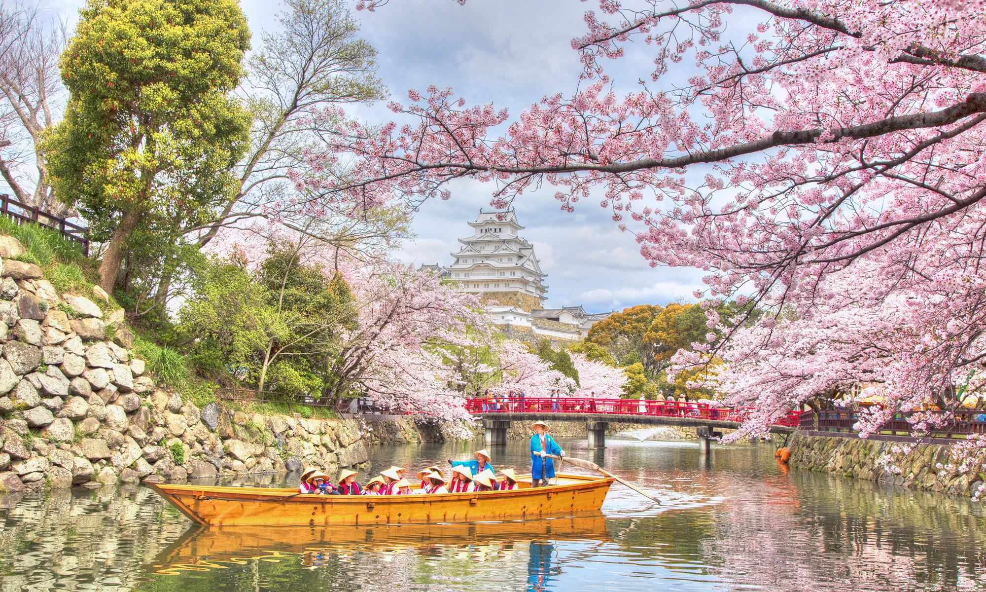 castello himeji in primavera sakura