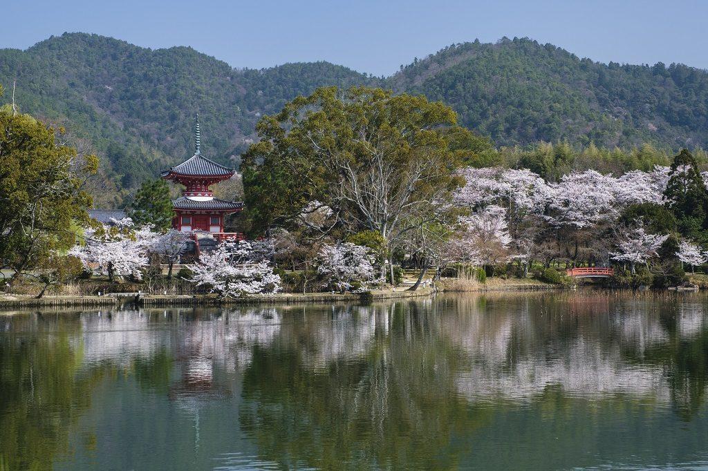 tempio Daikaku-ji visitare arashiyama