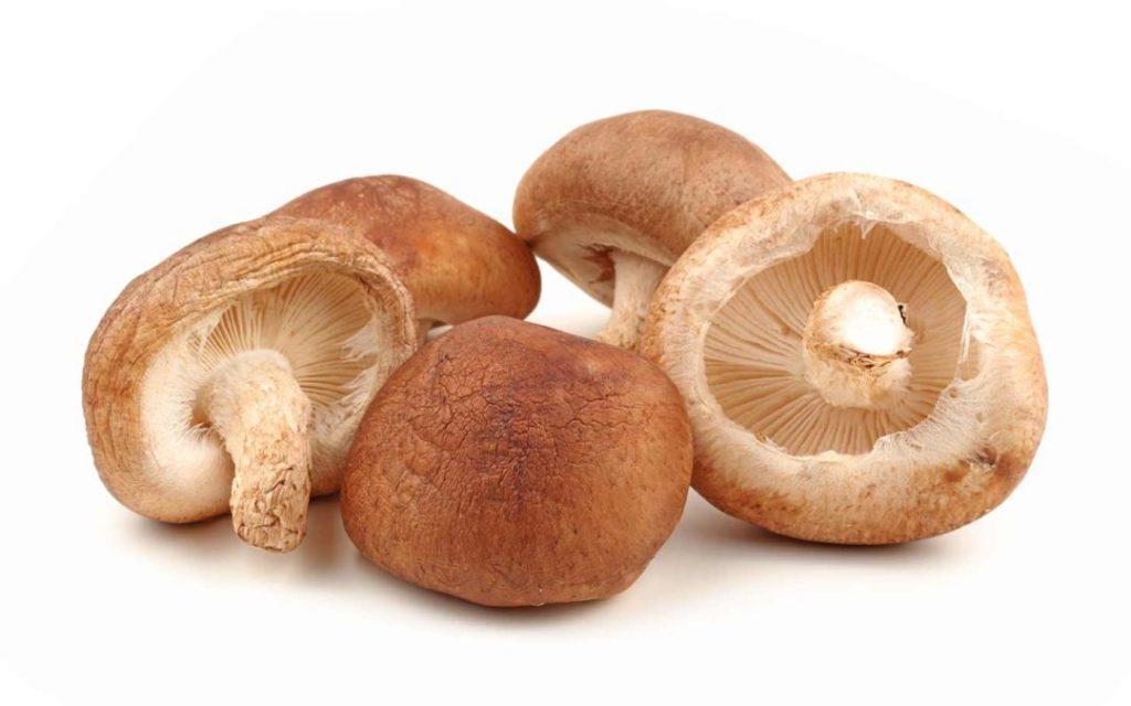 funghi shiitake dispensa giapponese