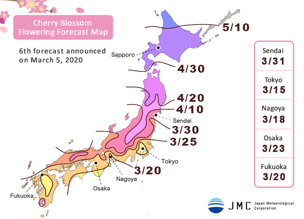 fioritura ciliegi 2020 previsioni sakura