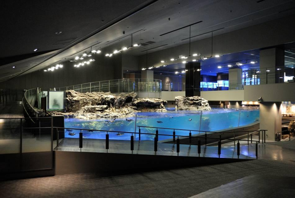 Acquario Sumida a Oshiage, Tokyo. Una buona sisita da fare per umi no hi, la festa del mare