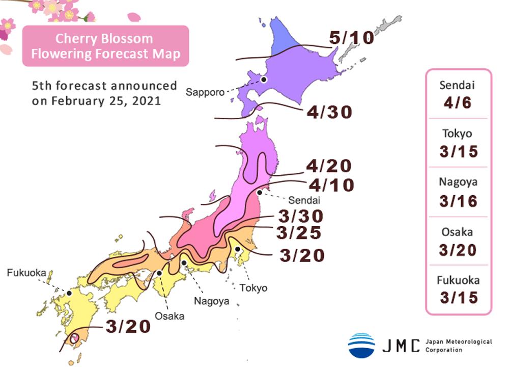 fioritura ciliegi 2021 previsioni sakura